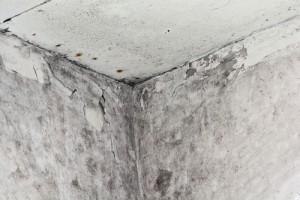 Jak odstranit černou plíseň z porézních materiálů