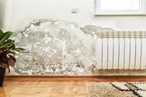 Jak odstranit plíseň ze stěn ve svém bytě?