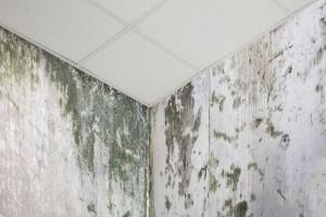 Bílá plíseň na stěně